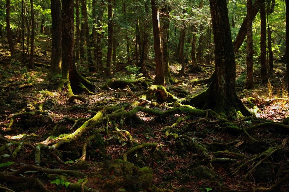 Duchy lasu i święte drzewa!